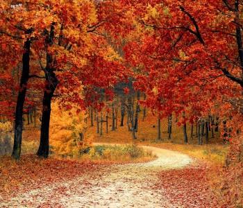 Herbstspecial 4=3